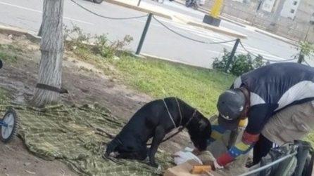 Pur non avendo niente, questo senzatetto si prende cura di un cane disabile