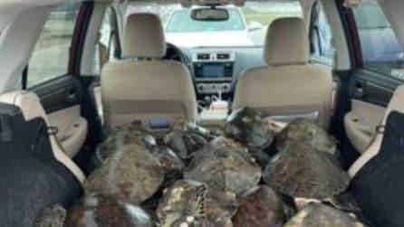 Le persone stanno riempiendo le loro auto di tartarughe marine per salvarle dalla tempesta invernale