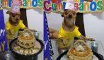 Il cagnolino è così felice che la gente ha ricordato il suo compleanno