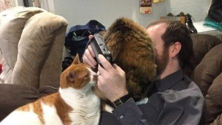 10 foto di gatti che si intrufolano nei posti più strani