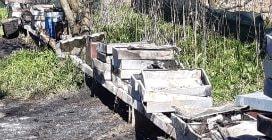 L'allevamento di api di Michele, 23enne casertano, distrutto da un incendio doloso