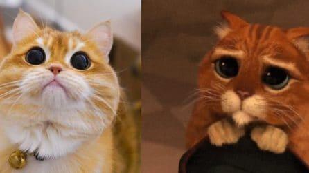 Il gatto con gli stivali di Shrek esiste davvero: che occhioni dolci
