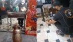 Il proprietario del ristorante prepara un pasto gratuito per i cani randagi che gli fanno visita