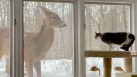 La magica amicizia tra un gatto e un cervo selvatico