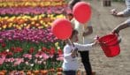 Roma, riapre Tulipark per i propri bouquet personalizzati di tulipani