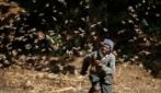 Milioni di locuste invadono i campi in Kenya