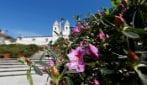 Roma, i vasi di Azalee sulla scalinata di Trinità dei Monti prossimi alla fioritura