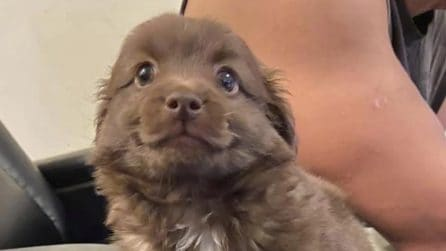 Il cagnolino che sorride diventa una star su Facebook