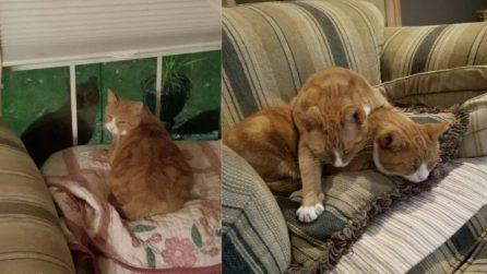 Salva un gatto randagio, ma il fratello si presenta fuori casa: la scelta può essere solo una