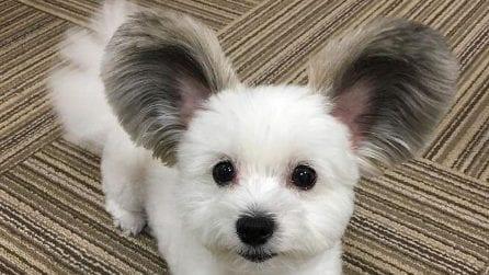 """Il cane """"Topolino"""" che ha fatto impazzire Instagram"""