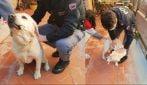 I poliziotti riportano a casa il labrador alla sua padrona