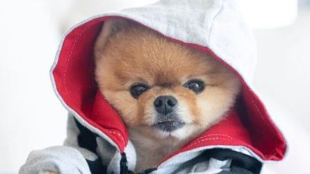 I cani influencer più famosi di Instagram