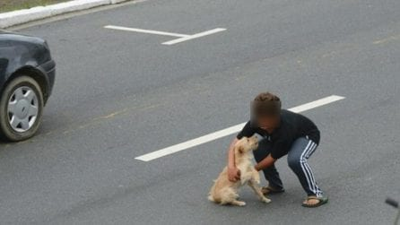 Cane investito resta fermo in strada: un bambino corre a salvarlo