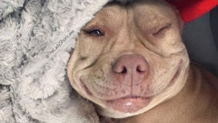 Salvano la vita a questa cagnolina che non smette più di sorridere ai suoi salvatori