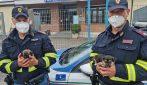 Orvieto, poliziotti salvano due cuccioli abbandonati e spaventati in autostrada