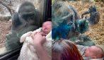 Gorilla si avvicina alla mamma con il neonato: la sua reazione ti scioglierà il cuore