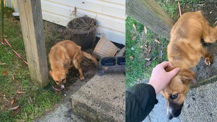 I padroni lo lasciano legato a un palo fuori casa, il cane viene salvato e comincia una nuova vita