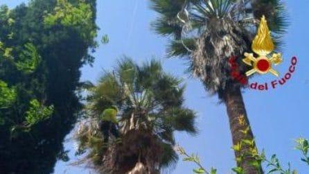 Il giardiniere resta appeso alla palma e sospeso nel vuoto