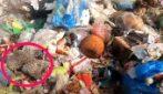 Un gruppo di volontari nota qualcosa nella discarica: la scoperta tra i cumuli di rifiuti