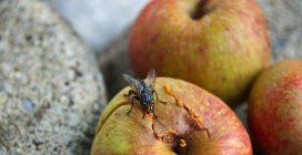 Come tenere lontane le mosche dalla cucina
