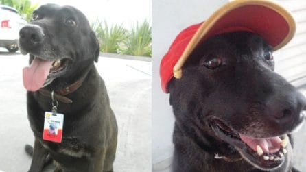 """Il cane abbandonato viene salvato e ottiene un """"lavoro"""" nella stazione di servizio"""