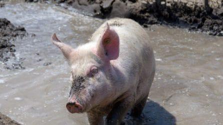Liberi, felici e protetti: le immagini degli animali salvati dal Rifugio Hope