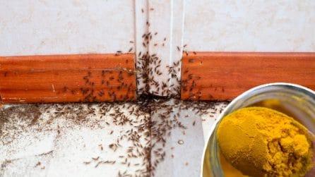 Come allontanare le formiche con un solo ingrediente