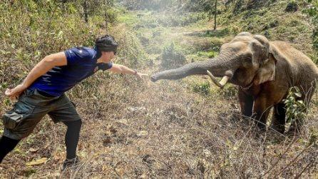 La reazione dell'elefante che non dimentica il veterinario che 12 anni fa gli ha salvato la vita