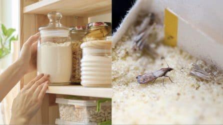 Come tenere lontane le farfalle della farina dalla dispensa