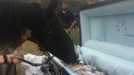 L'ultimo bacio del cavallo al suo vecchio padrone: un saluto emozionante