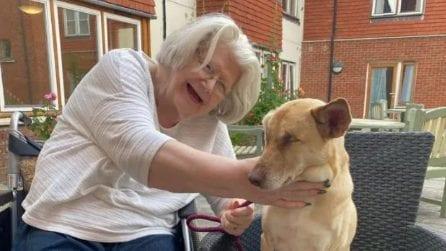 Maggie, cane da terapia cieco con un passato crudele: oggi assiste le persone bisognose