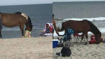 Branco di cavalli selvaggi diventa un incubo per i turisti su questa spiaggia
