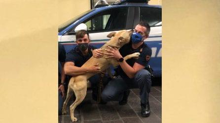 Pit bull si getta tra le braccia dei poliziotti, il padrone lo stava prendendo a bastonate