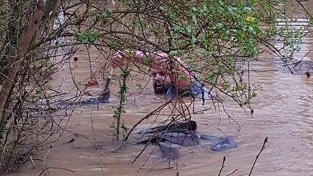 L'uomo che salvò tantissimi animali da un'alluvione con la sua barca