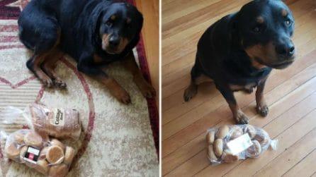 Ogni volta che i suoi padroni escono, questo cane custodisce il loro pane