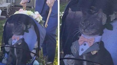 Il gatto deve portare gli anelli all'altare ma ruba completamente la scena