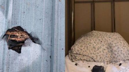 Una donna si è svegliata con un buco nel tetto e una roccia spaziale sul suo cuscino