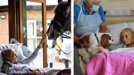 Jan, malata terminale, saluta per l'ultima volta il suo cavallo e i suoi cani