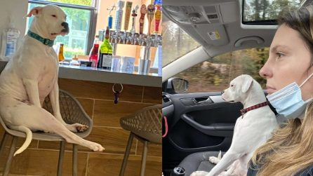 Il cane che non si lascia impressionare da niente e si comporta come un essere umano