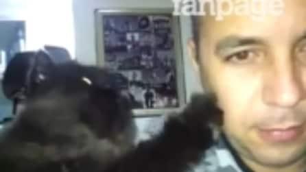 Il gatto che ricambia le carezze del suo padrone