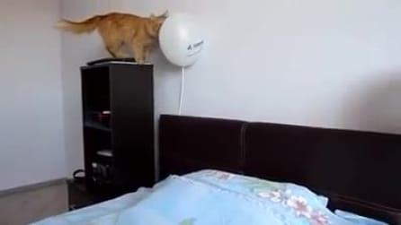Il gatto e il palloncino: il gioco divertente dal finale spaventoso