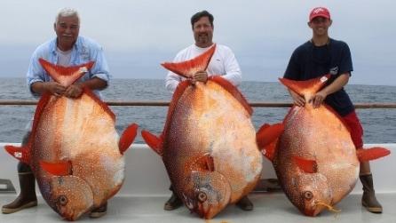 Pescano in un solo giorno tre enormi e rari pesci opah dal peso di 56 e 81 kg