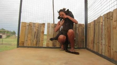 Il leopardo nero e la ragazza: giochi e tenerezze