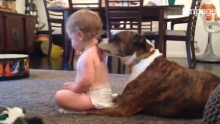 Bimbo pretende un particolare massaggio dal suo cane