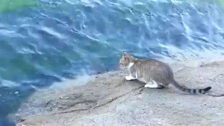 Il gatto pescatore, alla fine ottiene quel che vuole