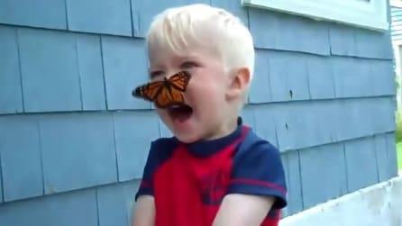 La farfalla vola sul naso del bambino e ci rimane