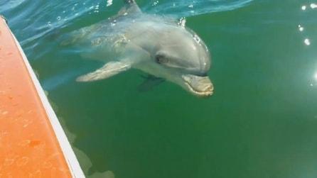 Un socievole delfino si lascia imboccare e accarezzare