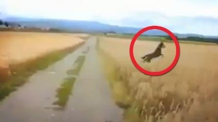 Il cane più felice del mondo: saltella come un grillo nell'erba alta