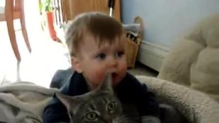 Amore di gatto: ha pochi mesi e già lui e il suo gatto sono inseparabili!