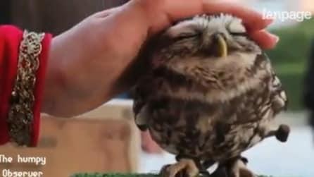 Ecco come gli animali reagiscono alle nostre carezze